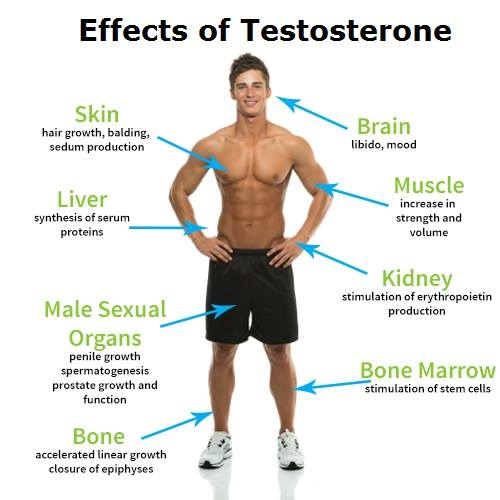 Effects of Low Testosterone